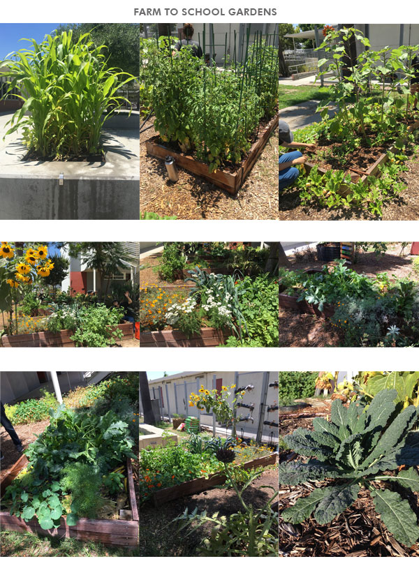 Farm to School Gardens